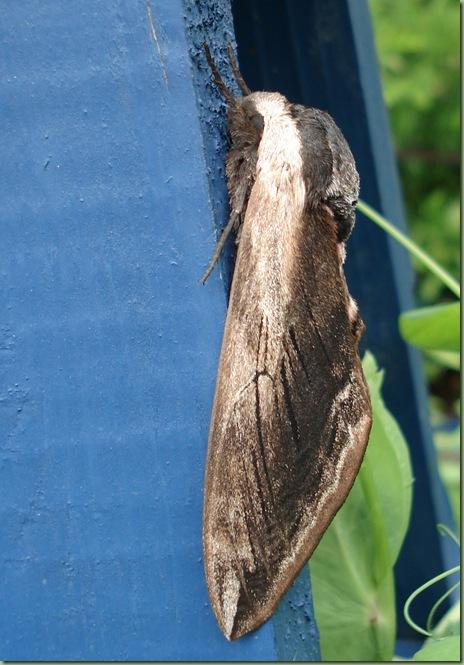 insekten från 2009